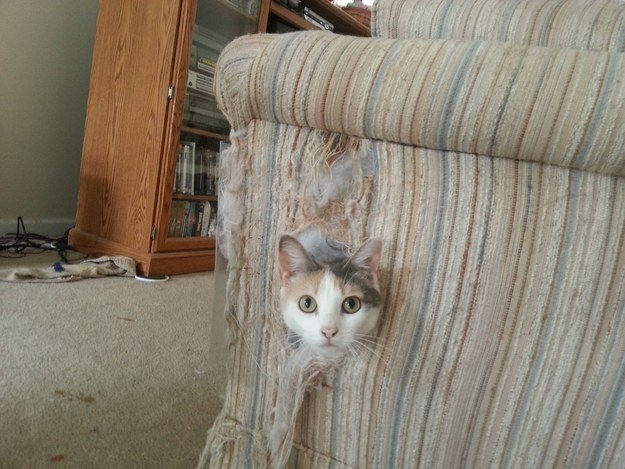Kwikku, Nakalnya kebangetan Kalo punya sofa siapsiap jadi bahan permainannya
