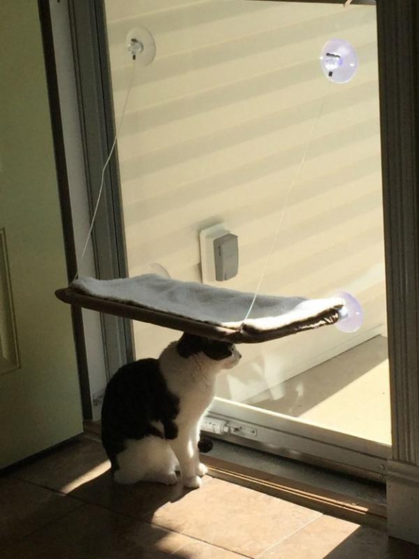 Kwikku, Lihat aja kelakuannya kalian bisa ngerti sendiri kan kenapa kalo kucing itu ngeselin tapi sekaligus juga ngegemesin