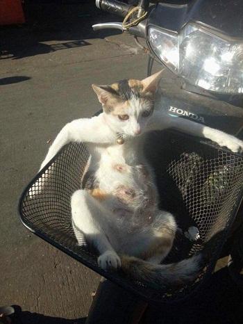 Kwikku, Hari minggu ini si empus lagi duduk di boncengin sama majikan pake motor
