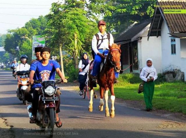 Kwikku, Pergi ke sekolah naik kuda hanya ada di indonesia
