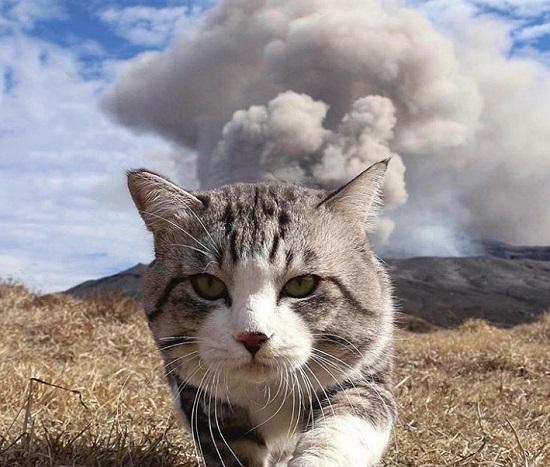 Kwikku, Gak ada kucing sekeren si empus yang satu ini