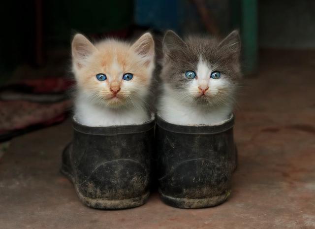 Kwikku, Kucing kembar yang menggemaskan