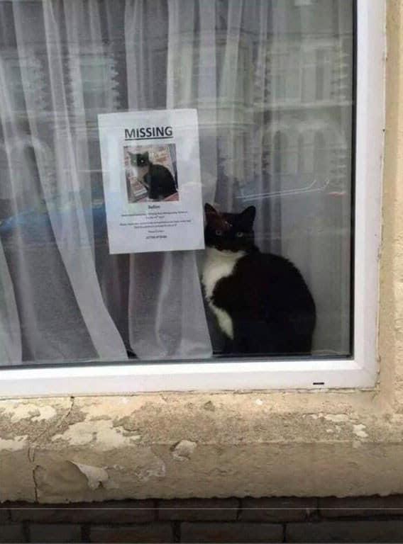 Kwikku, Kucing hilang