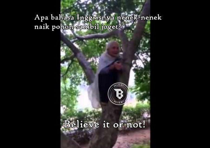 Kwikku, Apa bahasa inggrisnya neneknenek naik pohon sambil joget
