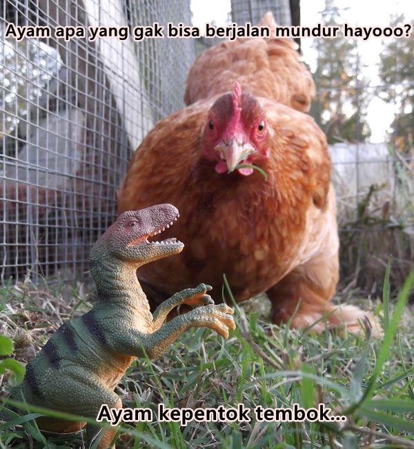 Kwikku, Kalo ayam yang bisa berjalan mundur Kalian bisa jawab gak pertanyaan yang terakhir ini