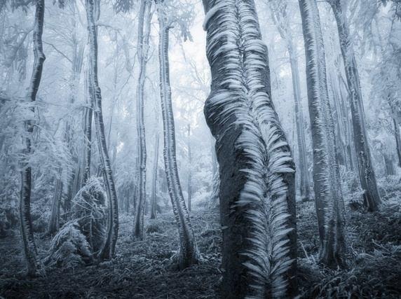 Kwikku, Hutan yang tertutupi es hingga membeku ini sangat memukau bukan