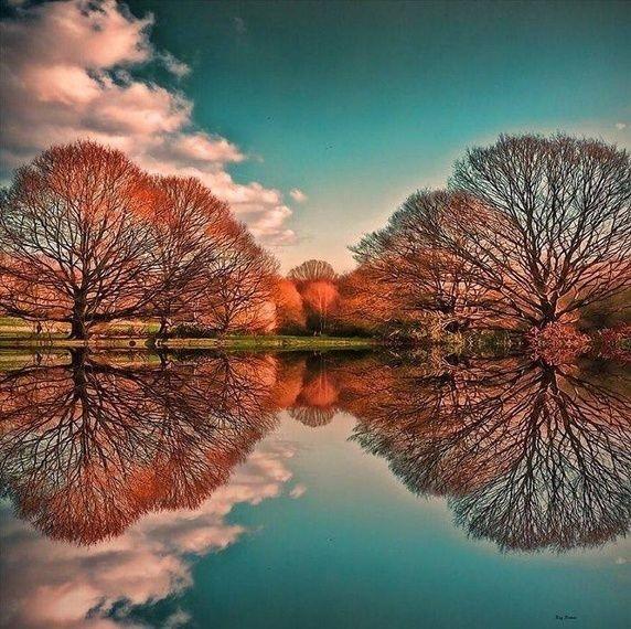 Kwikku, Bayangan pohon di taman Hyde di dalam air ini menakjubkan banget deh