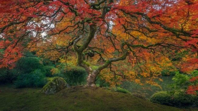 Kwikku, Beginilah penampakan musim gugur di Taman Jepang Potrland Keren kan