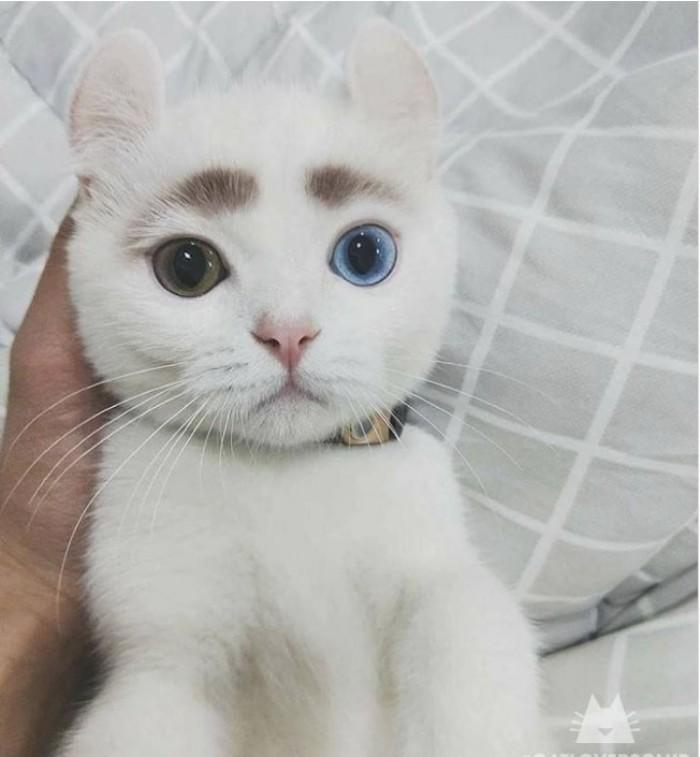 Kwikku, Selain disebut unik karena bulu di wajahnya yang seperti alis kucing ini juga memiliki warna mata yang berbeda Gemes deh