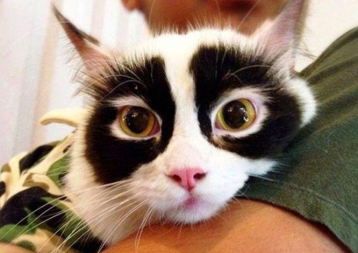 Kwikku, Kucing ini dijuluki dengan sebutan kucing Zoro karena motif bulu di matanya yang seperti topeng yang digunakan Zoro dalam film