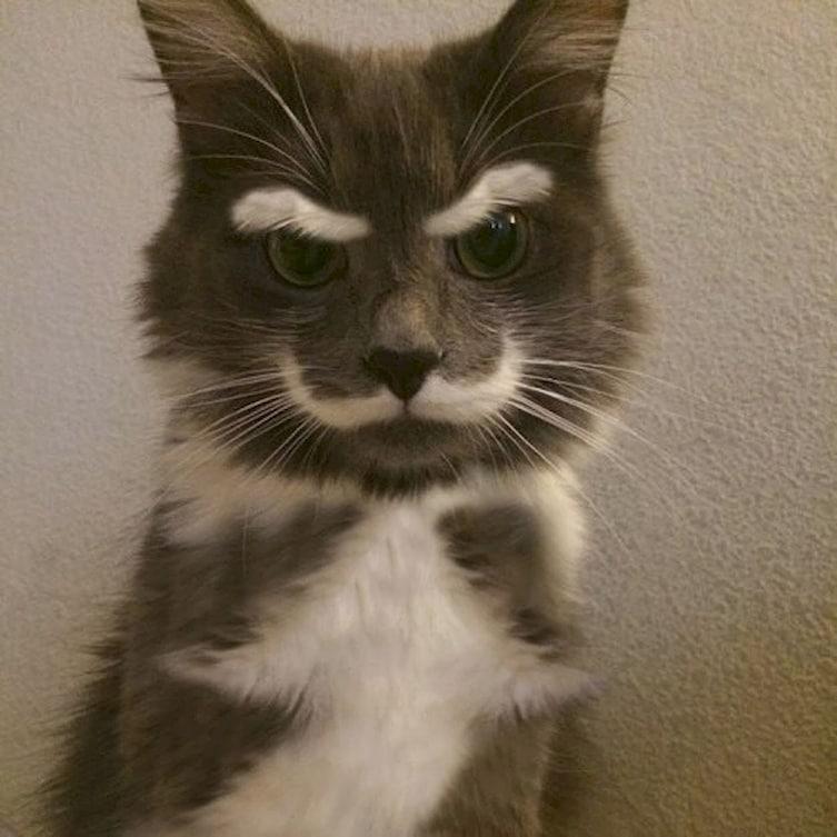 Kwikku, Kucing ini terlihat tua karena motif bulu diwajahnya yang seperti kumis dan alis Hahaha