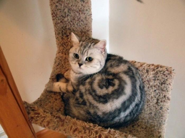 Kwikku, Dengan motif lingkaran di tubuhnya kucing gendut ini jadi sangat menggemaskan