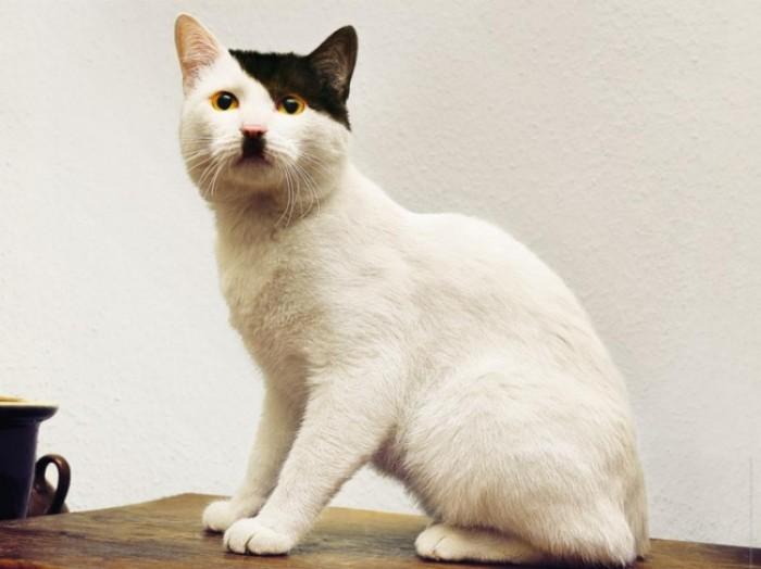 Kwikku, Kalau melihat wajah kucing ini bikin teringat sama pemimpin partai NAZI yang kejam itu loh Itu tuh Adolf Hitler