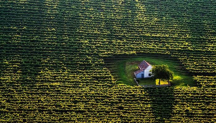 Kwikku, Rumah Di Tengah Ladang Hungaria