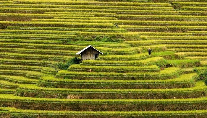 Kwikku, Mu Cang Chai Vietnam