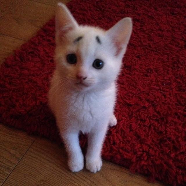 Kwikku, Apakah kalian para Cat Lovers punya kucing peliharaan dengan ekspresi wajah yang seimut ini