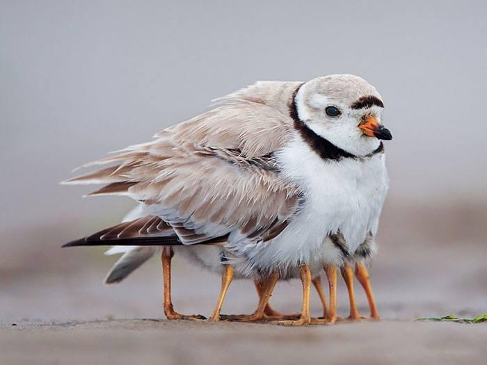 Kwikku, Sampai segitunya mereka melindungi anak anaknya dari udara dingin ya guys Meski induknya kedinginan yang penting anakanaknya merasakan kehangatan