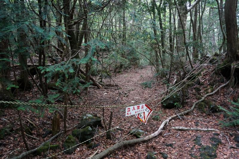 Kwikku, Hutan Bunuh Diri di Jepang