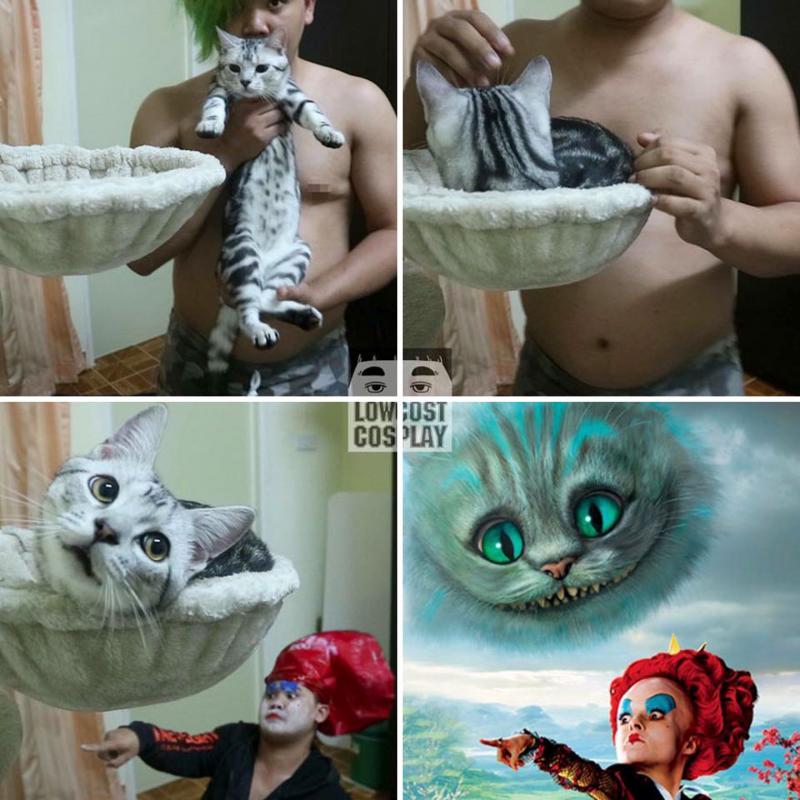Kwikku, Hanya bermodalkan kucing dan kreatifitas Kalian bisa menjadi apapun yang kalian mau di dunia ini