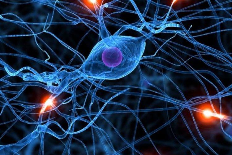 Kwikku, Dapat menyebabkan perubahan sel saraf pada otak