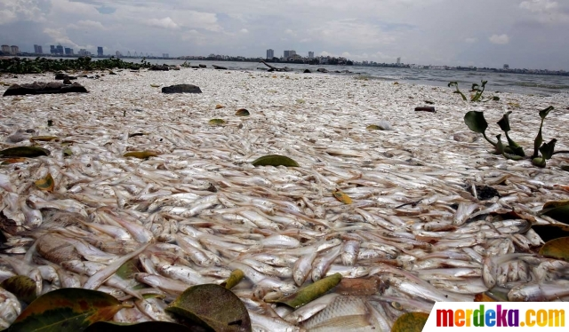 Kwikku, Ikan mati massal Swiss