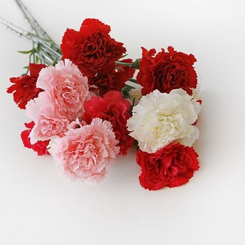 Kwikku, Carnation