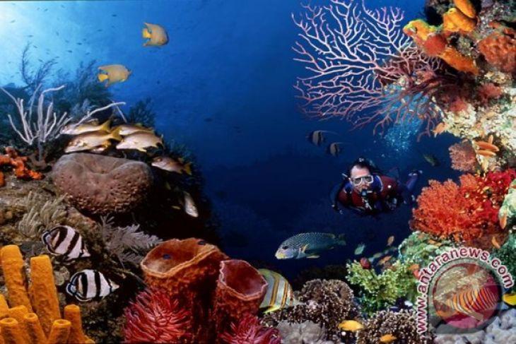 Kwikku, Beragam terumbu karangnya