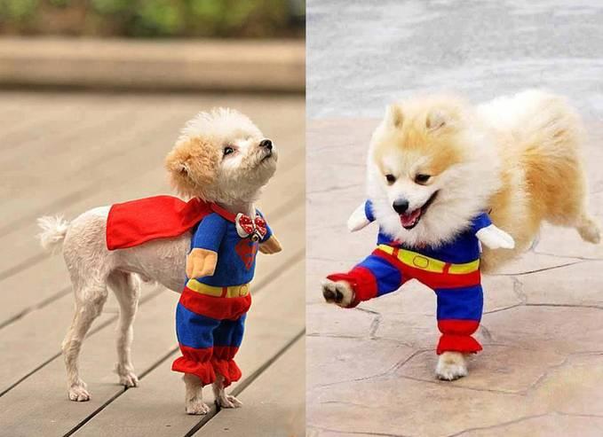 Kwikku, Super Pet