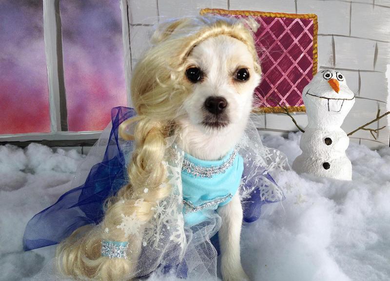 Kwikku, Frozen