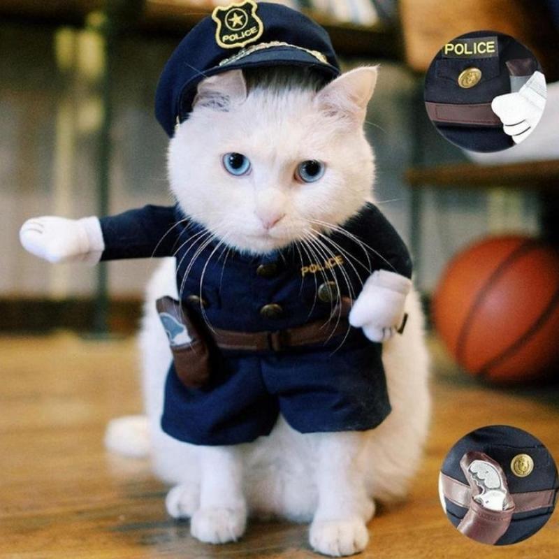 Kwikku, Polisi kucing