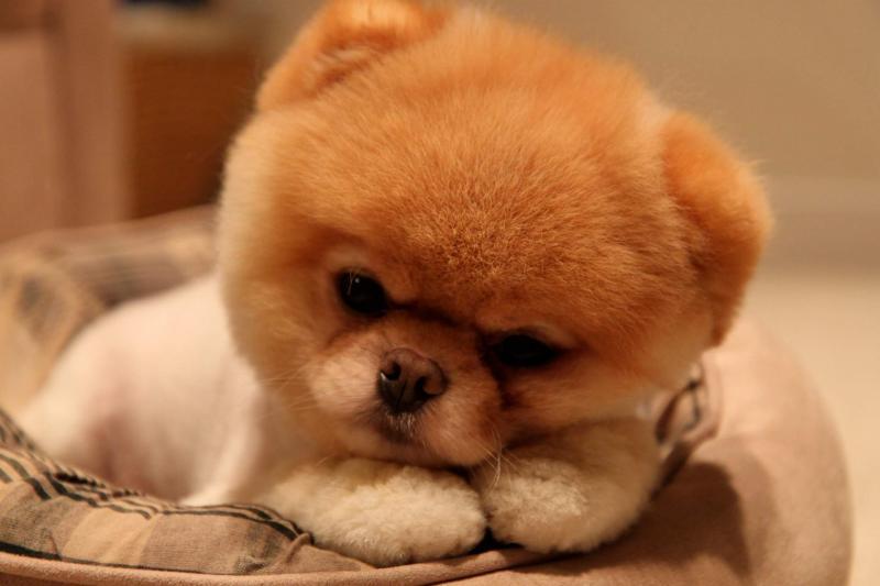 Kwikku, Anjing lucu