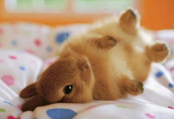 Kwikku, Kelinci petingkah
