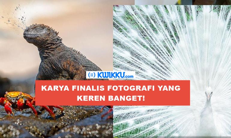 Kumpulan karya-karya Fotografi hebat dan keren dari Finalis Natgeo Nature 2017 yang bikin kamu kagum