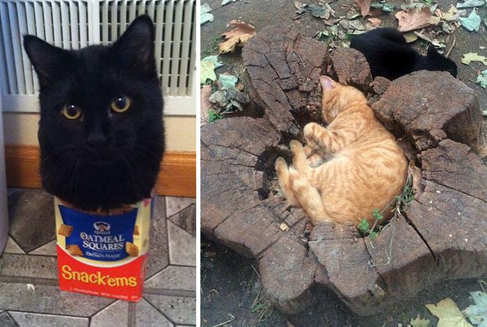 10 Kejadian Kucing yang Duduk Sembarangan Benar-benar Dimana Saja