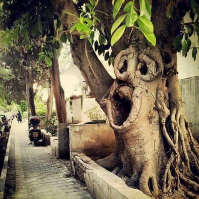 Bukti Kuasa Tuhan 10 Pohon Ini Punya Bentuk Nggak Masuk Akal