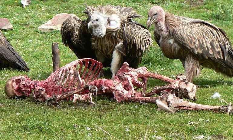 Inilah Ritual Usai Kematian Paling Menyeramkan yang Dilakukan Pada Jasad