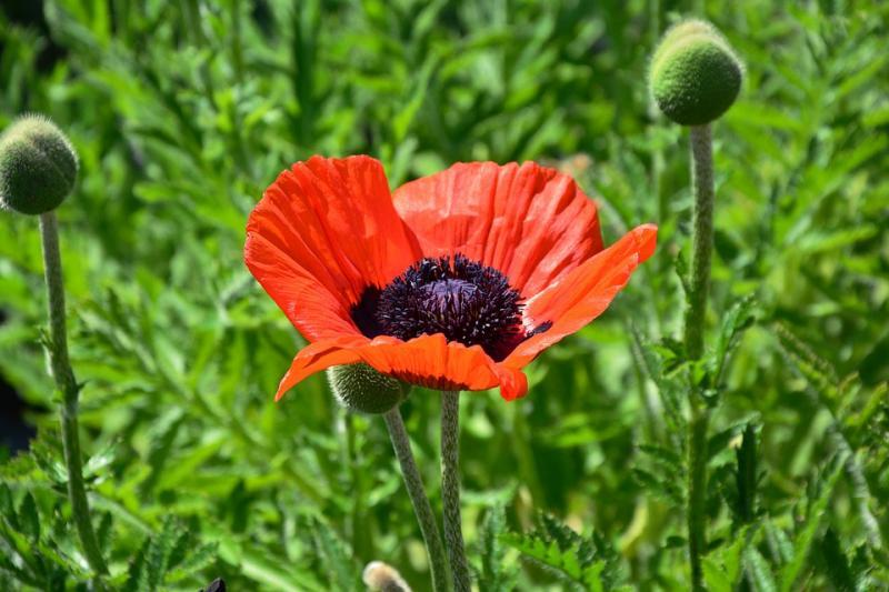 Bunga Bunga Cantik Tetapi Mematikan Inilah 6 Jenis Bunga Paling Beracun Di Dunia Kwikku
