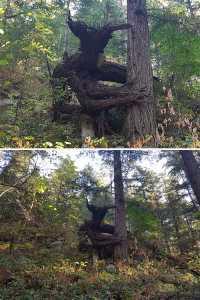 Ibarat Monster 9 Potret Pohon Ini Tak Layak Di Sebut Pohon Terlalu Mengerikan