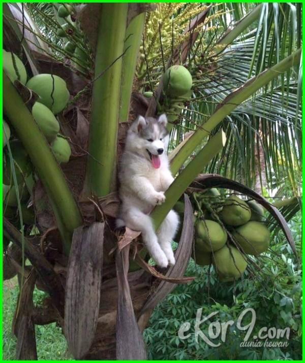 7 Anjing Ini Bertingkah Imut Kelakuannya Bikin Semua Orang Ngakak