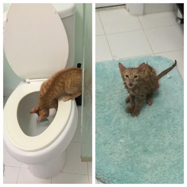 Repot Gini Jadinya Nasib Kalo Punya Kucing Di Rumah Yakin Masih Pengen Punya
